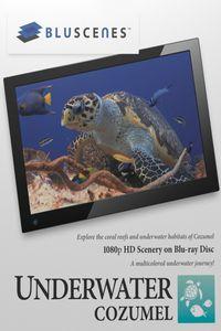 BluScenes: Underwater Cozumel