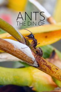 The Din Of Ants