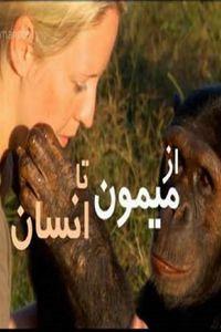 The Human Ape